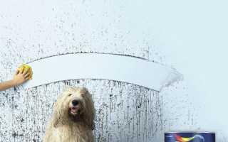 Краска Dulux: палитра цветов, ослепительно белые моющиеся составы для обоев, кухни и ванной