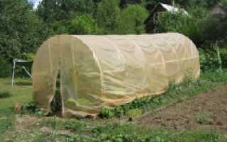 Дачная теплица (53 фото): конструкция для дачи и сада, эко-изделие